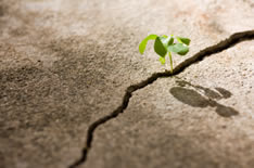 photo shows small plant overcoming advertisty and growing through a crack in hard ground